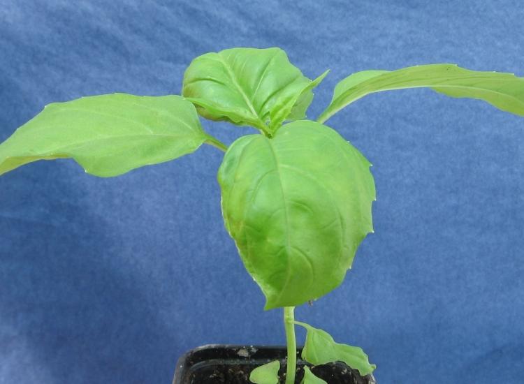 Vente directe de plantes aromatiques for Site de vente de plantes